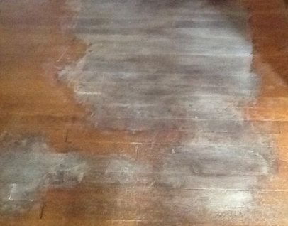 cat pee on floorboards