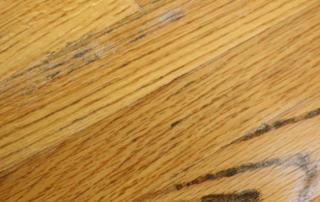 mold on hardwood floors
