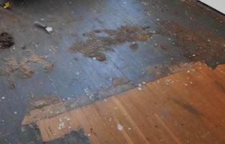 hardwood floor after carpet