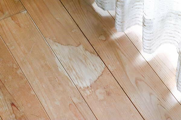 Dog Urine Soaked Into Hardwood Floors