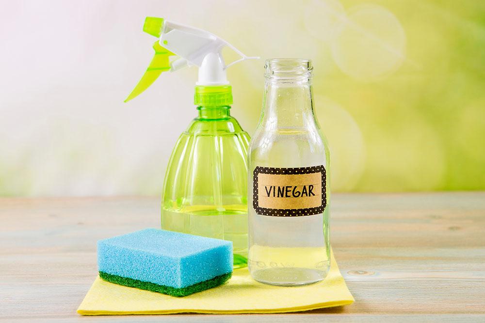 Does Vinegar Kill Black Mold